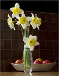 Kitchen Daffs