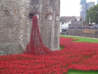 32-GP-poppy memorial tower of London
