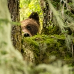05-KM-Great Bear rainforest