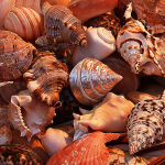 http://pudseycameraclub.co.uk/wp-content/uploads/2014/10/19-GS-Sea-Shells-of-Italy-150x150.jpg